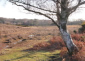Consultation on the allocation of land on the New Forest common for the Basic Payment Scheme