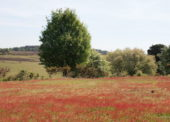 NFCDA response to the consultation on the allocation of land on the New Forest Common for the Basic Payment Scheme